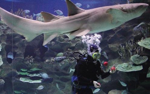 juggle shark crop